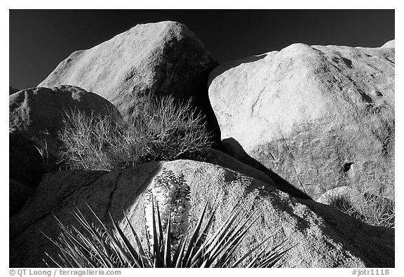 Yucca and boulders. Joshua Tree National Park (black and white)