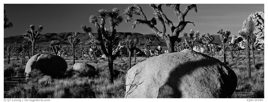 High Mojave desert scenery with boulders and Joshua Trees. Joshua Tree National Park (black and white)