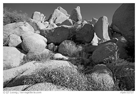 Wildflowers and boulders. Joshua Tree National Park (black and white)