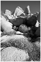 Wildflowers and rockpiles. Joshua Tree National Park ( black and white)