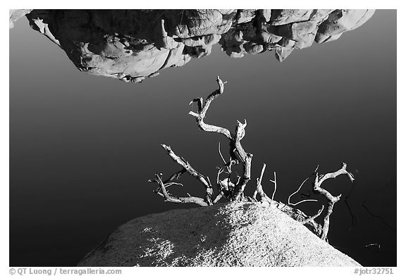 Reflection, rock, and branches. Joshua Tree National Park (black and white)