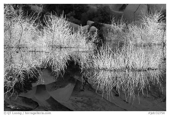 Willows, rocks, and reflections, Barker Dam, early morning. Joshua Tree National Park (black and white)