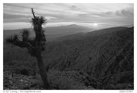 Yucca at sunset, Keys View. Joshua Tree National Park (black and white)
