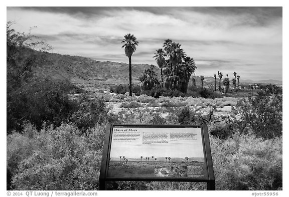 Interpretive sign, Oasis de Mara. Joshua Tree National Park (black and white)