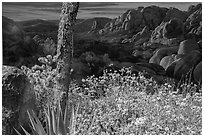 Flowers and mural. Joshua Tree National Park ( black and white)