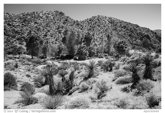Cottonwood Spring and bare hills. Joshua Tree National Park (black and white)