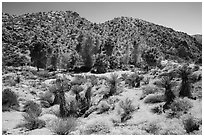 Cottonwood Spring and bare hills. Joshua Tree National Park ( black and white)