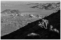 Cactus, slope in shade, and desert mountains. Joshua Tree National Park ( black and white)