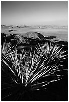 Yuccas and view, Ryan Mountain. Joshua Tree National Park ( black and white)