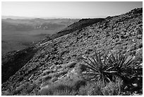 View towards Wonderland of rocks from Ryan Mountain. Joshua Tree National Park ( black and white)