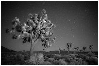 Joshua trees and starry sky. Joshua Tree National Park ( black and white)