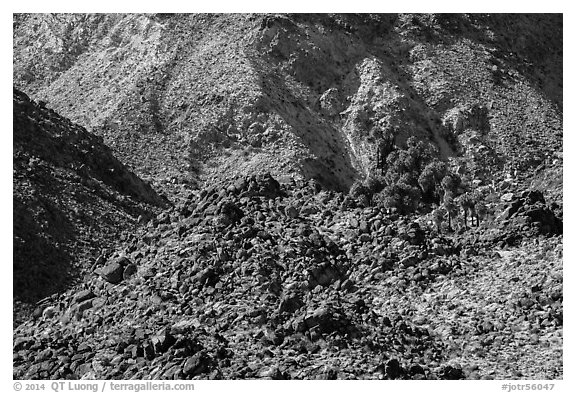 Craggy desert mountain slopes with oasis. Joshua Tree National Park (black and white)