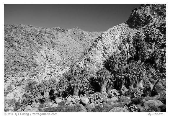 Rocky canyon and 49 Palms Oasis. Joshua Tree National Park (black and white)