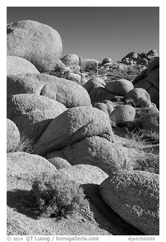 Sage and boulders, White Tanks. Joshua Tree National Park (black and white)