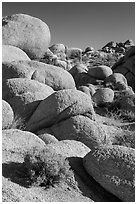 Sage and boulders, White Tanks. Joshua Tree National Park ( black and white)