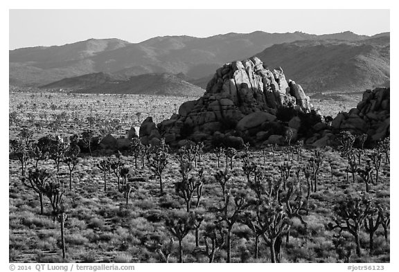 Joshua tree grove and rock outcrops in Hidden Valley. Joshua Tree National Park (black and white)