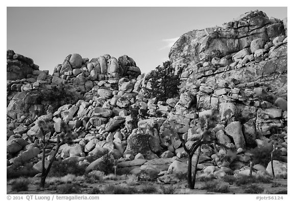 Joshua trees and tall rock outcrops. Joshua Tree National Park (black and white)