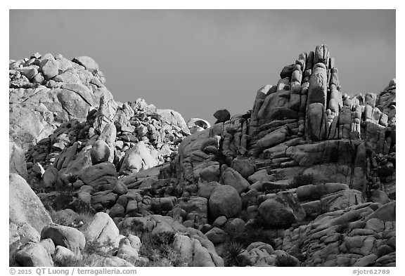 Wonderland of Rocks. Joshua Tree National Park (black and white)