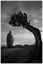 Boulder and juniper at night with moonset glow. Joshua Tree National Park ( black and white)