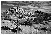 Yuccas and boulder outcrops,. Joshua Tree National Park ( black and white)