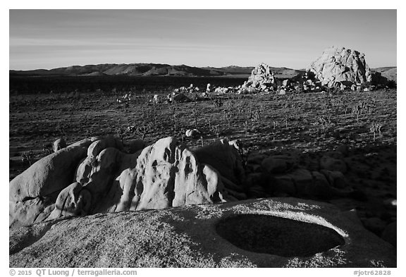 View from top of rock over Joshua Tree plain. Joshua Tree National Park (black and white)