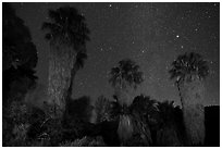 Fan palms, Cottonwood Spring Oasis at night. Joshua Tree National Park ( black and white)