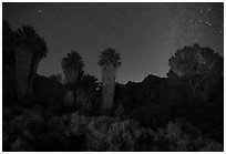 Cottonwood Spring Oasis at night. Joshua Tree National Park ( black and white)