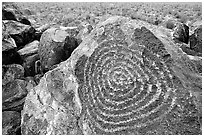 Hohokam petroglyphs on Signal Hill. Saguaro National Park, Arizona, USA. (black and white)