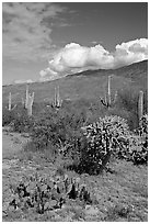 Grassy area near Mica View, Rincon Mountain District. Saguaro National Park, Arizona, USA. (black and white)