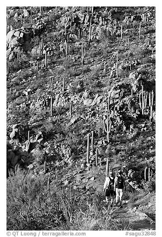 Hikers descending Hugh Norris Trail amongst saguaro cactus, late afternoon. Saguaro National Park (black and white)