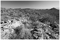 Rocks, flowers and cactus with Panther Peak and Safford Peak in the background. Saguaro National Park, Arizona, USA. (black and white)