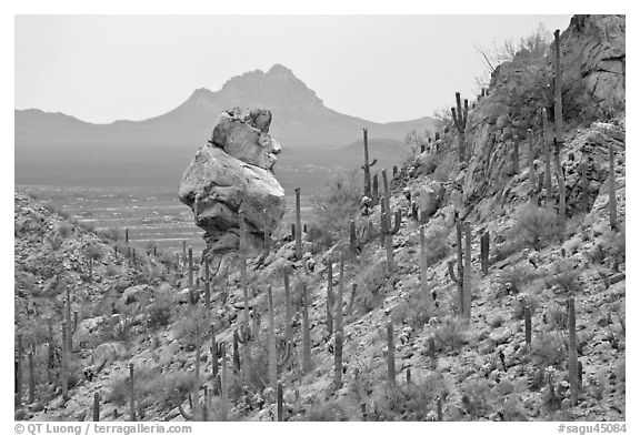 Cactus slope and balanced rock. Saguaro National Park (black and white)