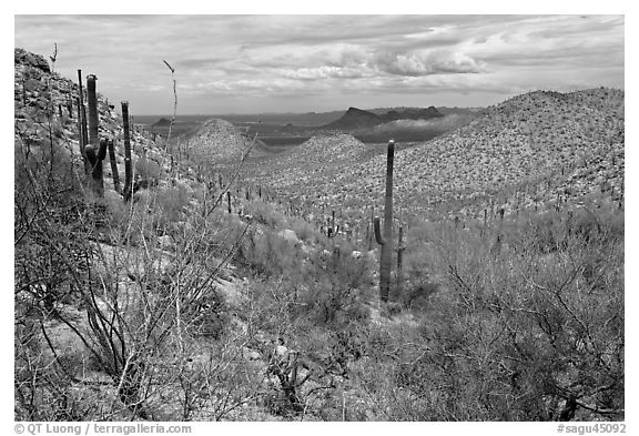 Tucson Mountains from Hugh Norris Trail. Saguaro National Park (black and white)