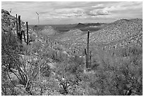 Tucson Mountains from Hugh Norris Trail. Saguaro National Park ( black and white)