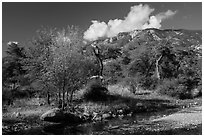Decidious trees, Miller Creek and Rincon mountains. Saguaro National Park ( black and white)