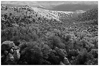 Chaparral and oaks along Miller Creek, Rincon Mountain District. Saguaro National Park ( black and white)