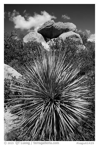 Sotol and balanced rock, Rincon Mountain District. Saguaro National Park (black and white)