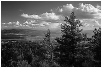 Pine trees and afternoon clouds from Rincon Peak. Saguaro National Park ( black and white)