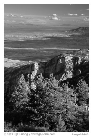 Pine trees, cliffs, and desert from Rincon Peak. Saguaro National Park (black and white)