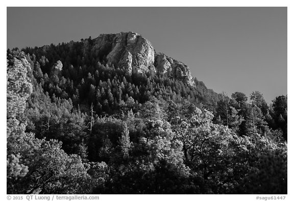 Rincon Peak rising above pine forests. Saguaro National Park (black and white)