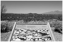 Good neighbors interpretive sign. Saguaro National Park ( black and white)