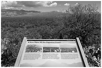 Where have all the saguaro gone interpretive sign. Saguaro National Park ( black and white)