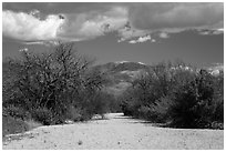 Dry wash, Rincon Mountain District. Saguaro National Park ( black and white)