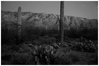 Cactus, Rincon Mountains, and star trails at night. Saguaro National Park ( black and white)