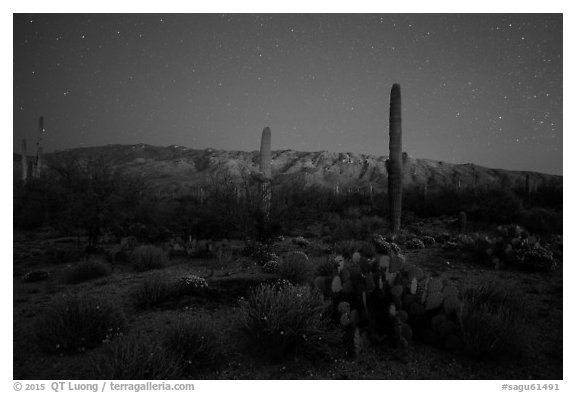 Cactus, Rincon Mountains, and star field at night. Saguaro National Park (black and white)
