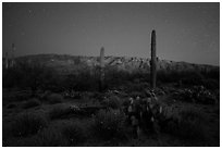 Cactus, Rincon Mountains, and star field at night. Saguaro National Park ( black and white)