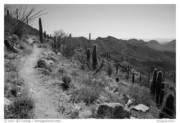 Hugh Norris Trail. Saguaro National Park (black and white)