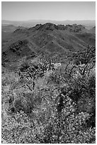 Wildflowers and Tucson Mountains. Saguaro National Park ( black and white)