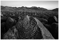 Petroglyphs on Signal Hill and Tucson Mountains at sunset. Saguaro National Park ( black and white)