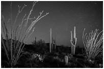 Ocotillo and saguaro cactus at night. Saguaro National Park ( black and white)